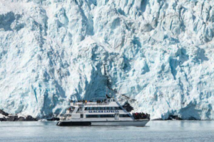 An Alaska cruise can be the perfect event for a half-day or full day, depending on your travel plans. Think also about your travelers – do you need something that is family friendly or adventuresome? Are you in search of glaciers? See life? Or a memorable event that includes a taste of Alaska salmon and prime rib? Having taken several of the options offered by Major Event Tours (and heard the glowing comments of B&B guests season after season!) Whether my guests were seeking the experience-on-a-budget or the all-day, do it all memory maker, they describe the beauty of Alaska. Further, they speak of the staff and nature guides who made the tour amazing due to great information and friendly customer service. Can't decide? Visit the list of tours for more details, then check with your B&B host about making reservations. When sitting in Anchorage, you may wonder how the day looks in Seward, miles away and on the water. Major Marine features a webcam at Seward Harbor that will entice you to consider spending time on the water. Remember the link when you get home or send it to family and neighbors who would enjoy seeing what you are doing on your Alaska vacation. Your Facebook friends can also keep tabs – have them visit Major Marine on Facebook. Look for the video of the breeching whales! Still not convinced? Consider that Major Marine Tours have been locally owned and operated for more than 25 years AND that they consistently rate as a 'five star' option on the travel advising sites. One of the most often mentioned joys of the tours is the opportunity to view humpback whales – and although Major Marine cannot guarantee any sightings, visitors often wonder if they have the whales and other sea life 'on the payroll.'